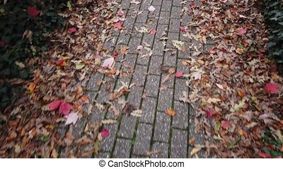 Walking by lane in autumnal park. Fallen leaves are on both sides of park lane.