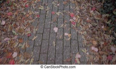 Walking via paved footstep in autumnal park. Fallen leaves are on both sides of park lane 4k 50 fps