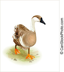 Walking domestic goose.Watercolor style