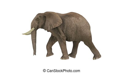 elephant - walking elephant