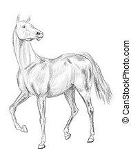 Walking horse drawing