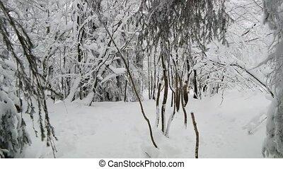 Walking in a forest in winter (POV)