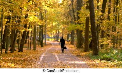 Walking in autumn park - Unidentifieble person walking in...