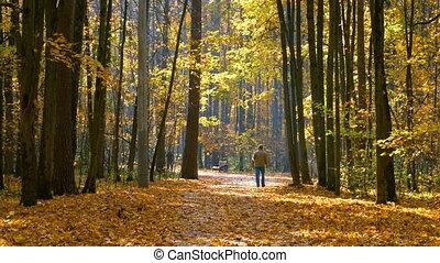 Walking in autumn park - Walking in the sunny autumn park