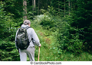 Walking in forest. Back view of man going through the woods