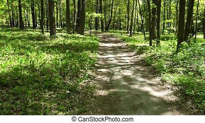 walking in green forest