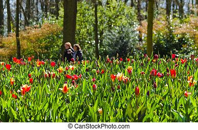 Walking in park in spring