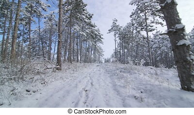 Walking in snow through the forest