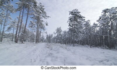Walking in snow through the winter forest point of view