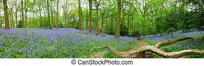 Walking in the Bluebells - Path through Chaddesley Corbett...