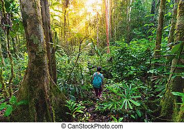 Walking in the dense virgin jungle