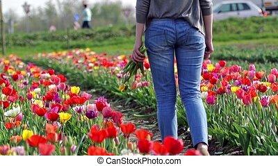 Walking in tulip field