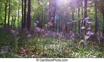Walking in West Woods near Marlborough, Wiltshire, England - United Kingdom