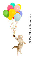 walking kitten or cat tabby with colorful balloons isolated