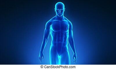 Walking male in medical display - Walking male in medical...