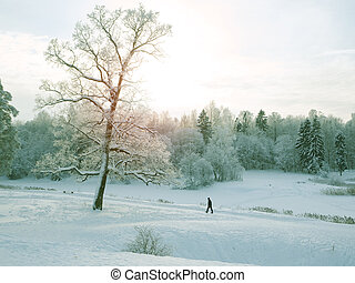 Walking man in a Park. Winter landscape with a man