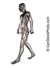 walking man radiography made in 3D