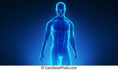 Walking man with medical data - Walking man with medical...