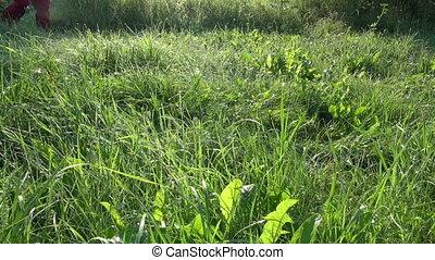 walking on dewy summer grass