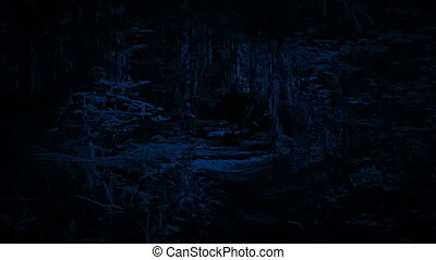 Walking On Forest Trail At Night