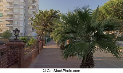 Walking on sidewalk lined with palms. Street with car...
