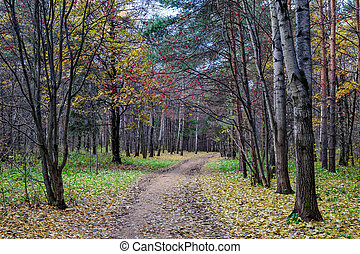 Walking path in autumn park