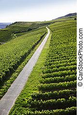 Rheingau Riesling Vineyards - Walking path in Rheingau...
