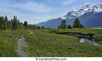 Walking path in Southeast Alaska - Walking trail near Haines...