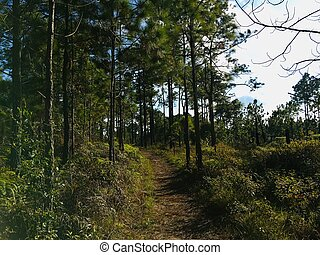 Walking path in the wood