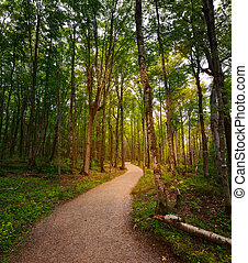 Walking Path - Path Through The Sunny  Forest