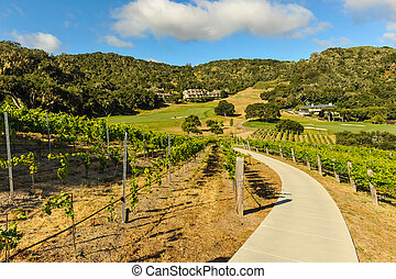 Walking path through a vinyard in mountains
