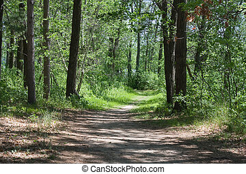 Walking path through the Forest