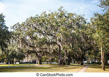 Walking Paths Among Oak Trees with Spanish Moss