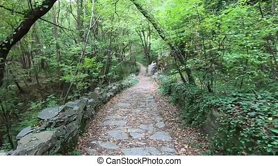 Walking paths in mountain forest