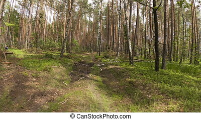 Walking POV in the forest