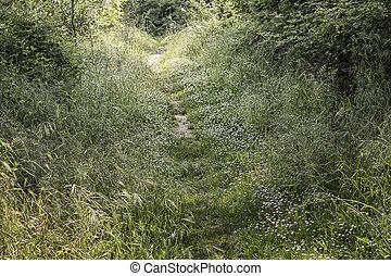 Walking road in the pinewood forest near Marina Romea - ...
