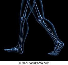 Walking skeleton - 3D render of medical skeleton in walking...