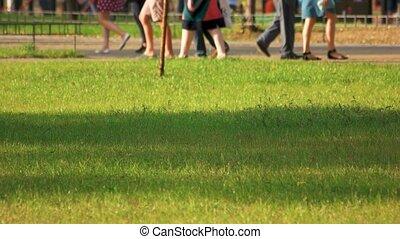 Walking strolling people in the park.