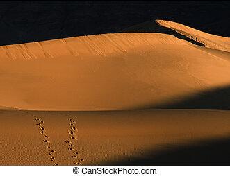 Walking the Dunes - Two people walking onlong the ridge of...