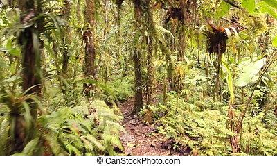 Walking through cloudforest