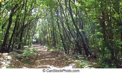 walking through rain forest in Canary islands. - Walk...