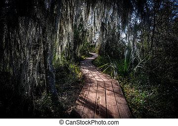 Walking Through Spanish Moss on wooden boardwalk