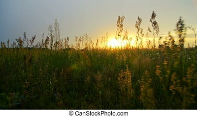Walking through tall grass on sunset POV