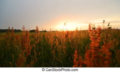Walking through tall grass on sunset POV