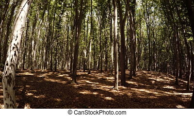 Walking through the autumn forest. 1080p video with natural...