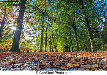 Walking through the forest in autumn