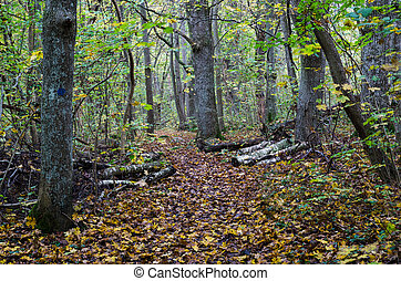 Walking trail in fall colors