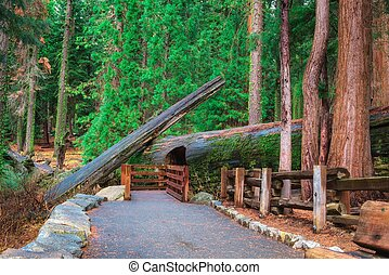 Walking trail in Sequoia National Park, California