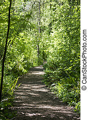 Walking trail in the woods - A walking trail in the woods ...