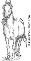 Walking white horse sketch portrait